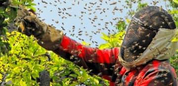Bee Control - Capital Pest Removal Albany NY