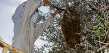 Beehive Removal - Capital Pest Removal Albany NY