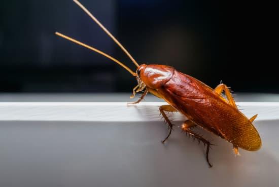 Roach Exterminator Albany NY - Capital Pest Removal