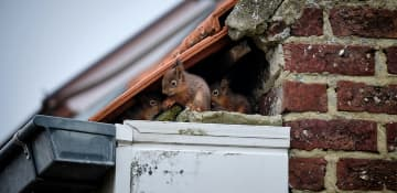 Wildlife Removal Albany NY - Capital Pest Removal